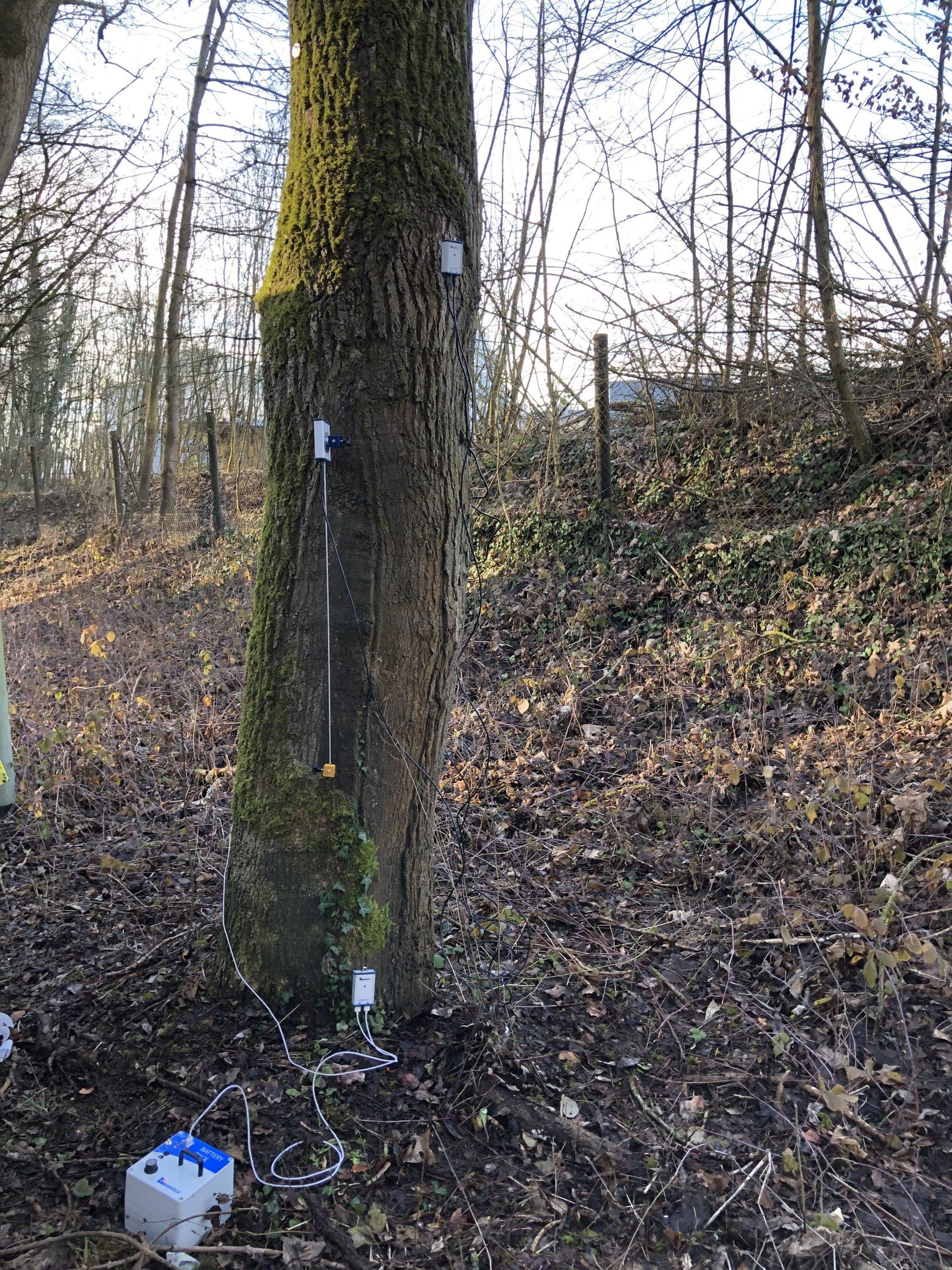 Baumgutachten Baumdoktor Zugversuch Baumsachverständigen